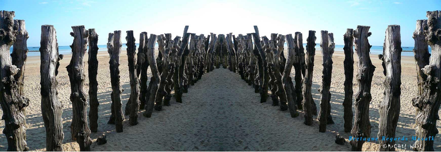 Des pieux de bois sur la plage