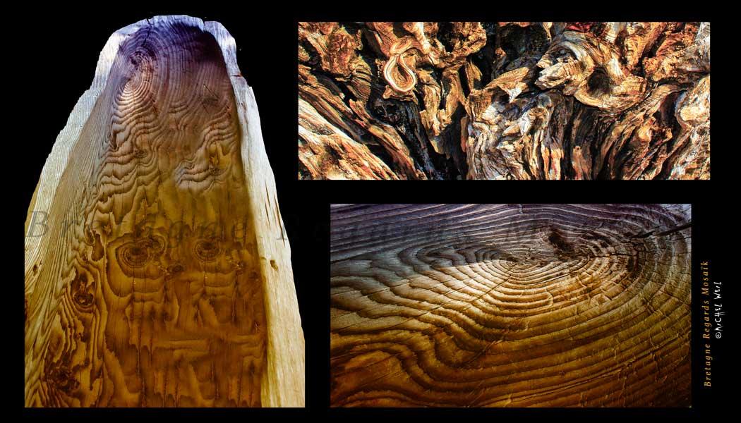 Histoires de bois
