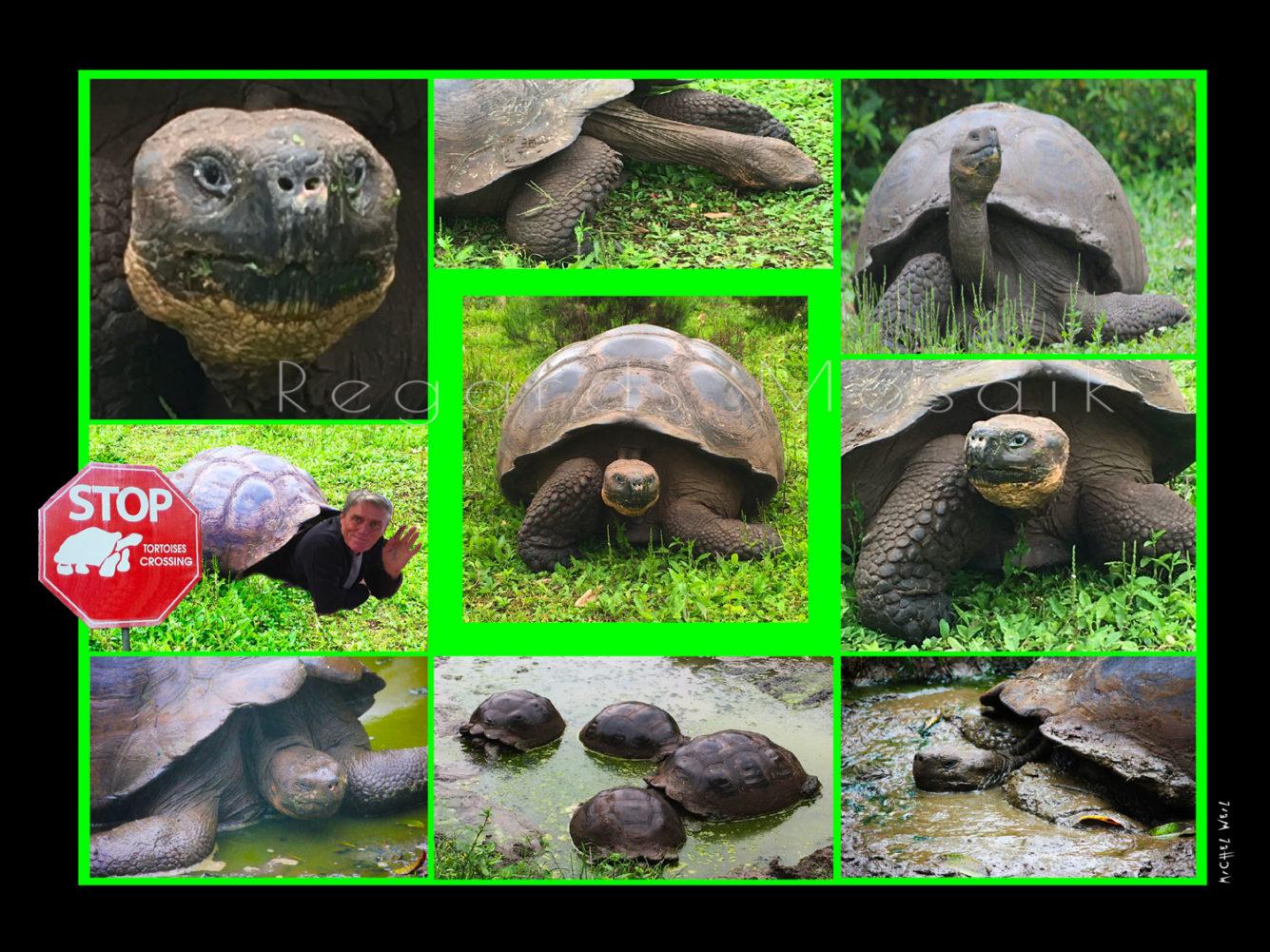 Une vie de tortue
