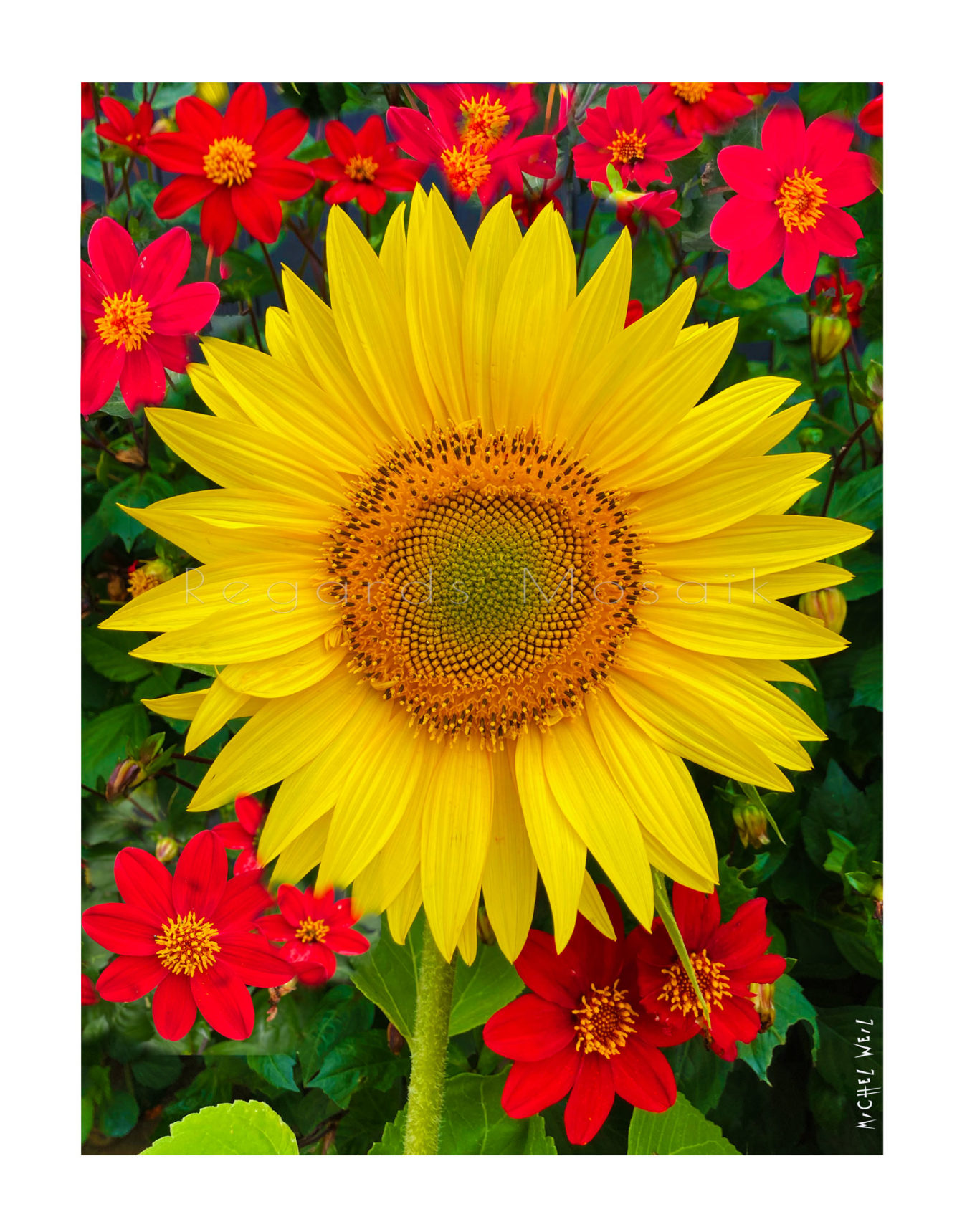 The tournesol and Co